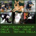våra kära husdjur
