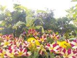 Florakullen