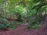 Pålsjö skog