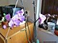 Min orkidé blommar tacksamt