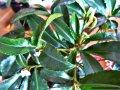 Samma blomma med nytt grönt