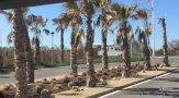 Bruna palmer vid infarten till camping mar azul i Balerma