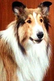 Bildresultat för Lassie